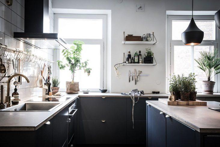 plants kitchen 732x489